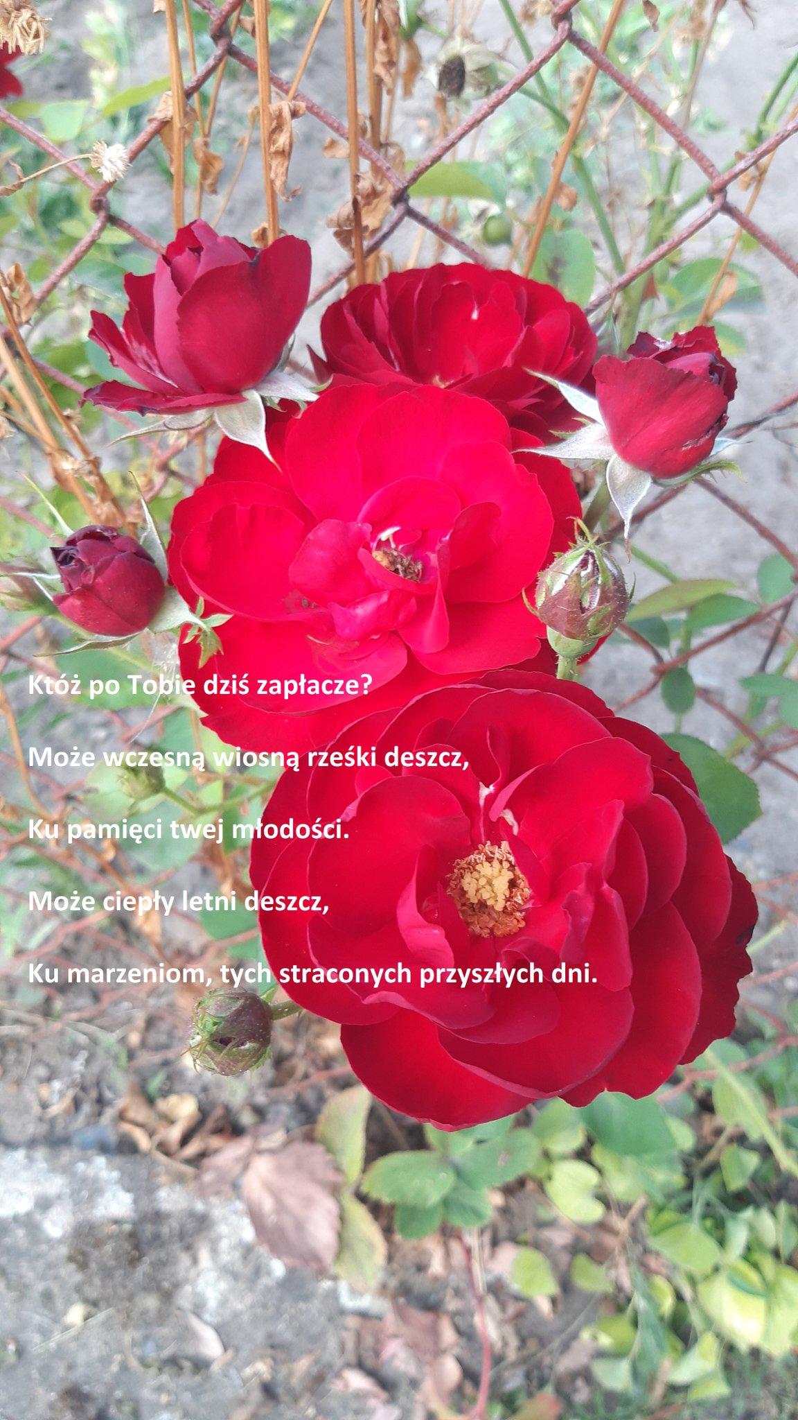 Natalia Bajor On Twitter New Poem Pl Nataliabajor