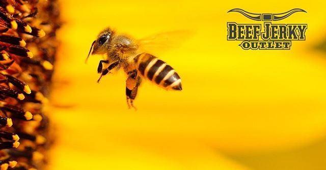 🐝Happy National Honey Bee Day! Pick up some Honey Sticks in all our locations! Rbeefjerky.com #honeybees #honey #jerky #beefjerky #jerkyheaven #biltong #gamejerky #hotsauce #dryrubs #popcorn #freesamples #atlanticcity #tintonfalls #palisadesc… ift.tt/2KWGNgf
