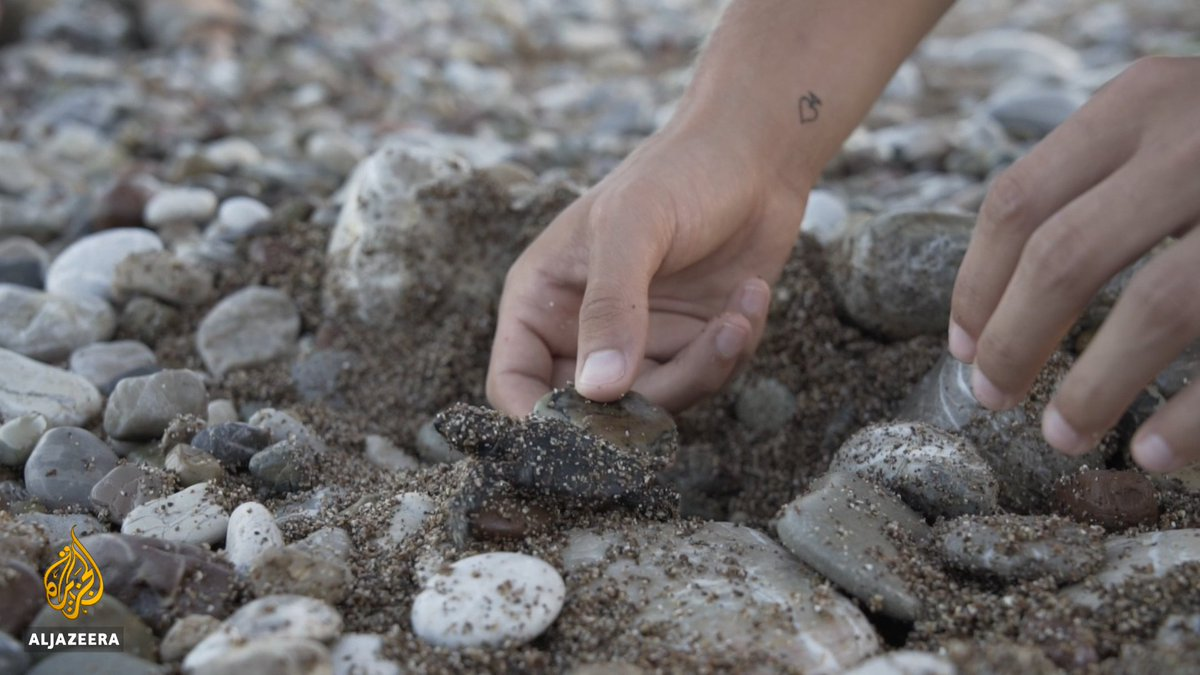 Every summer in Greece, hundreds of volunteers help sea turtle hatchlings as they embark on their perilous journey to the sea.