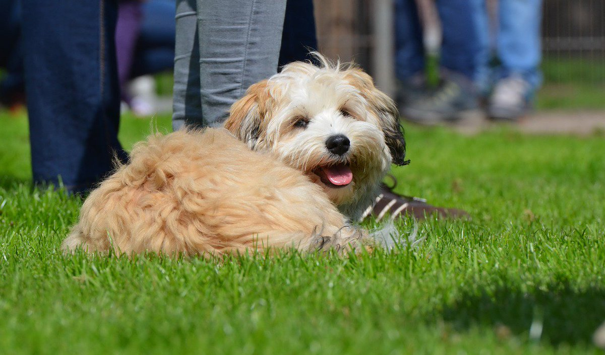 Even the #smile of a small #dog has a big effect!