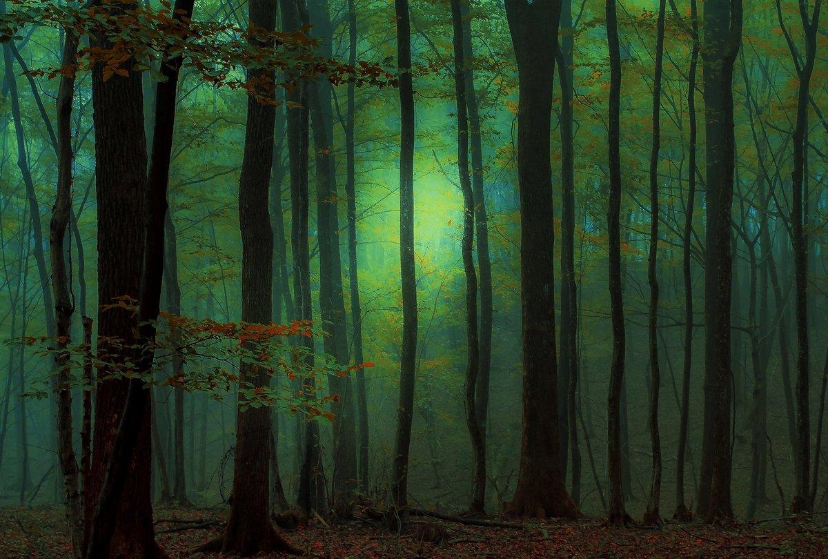 Forest 9 500px.com/photo/10460565…