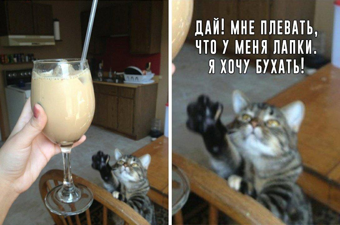 месте пьющий кот горе в семье картинка отличаются отличной