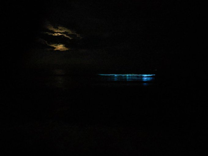Bioluminescence at Valmiki Nagar beach
