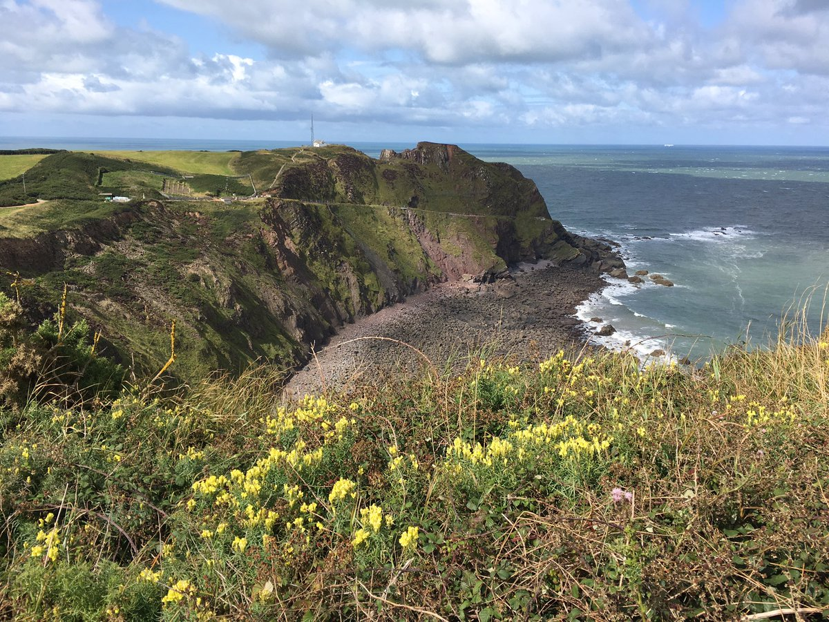 Flowers in the landscape  • Toadflax nr Hartland Point  • Honeysuckle & stile   #wildflowerhour <br>http://pic.twitter.com/SMHCA9it2G