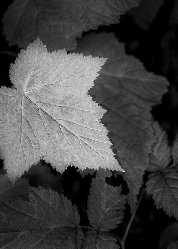 Art for the Eyes! https://buff.ly/2JuySFn #blackandwhitephoto #art #wallart#artbuyer #walldecor #abstract #leaf #nature