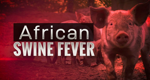 40,000 #pigs killed due to #AfricanSwineFever in #Ruse, #Bulgaria yamkin.com/2019/08/18/400…