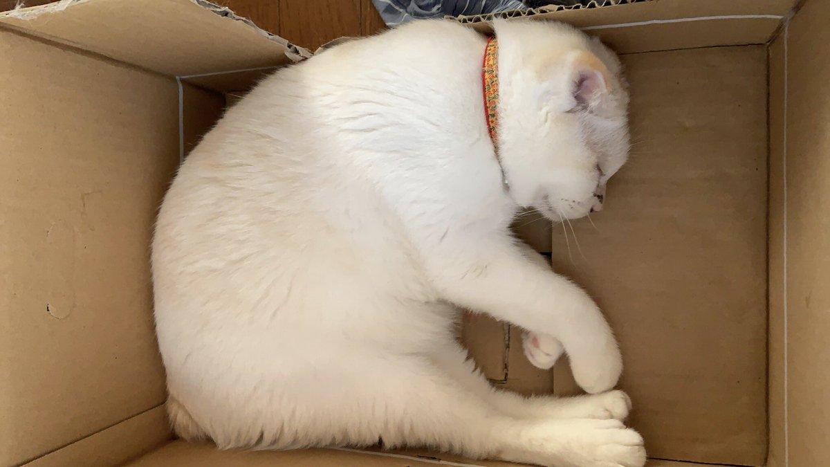 ネコって箱好きですよね箱に入っているネコを見て…そろそろ○○もいいんじゃね~か!?なんて思ったりして(笑)今日の話は【番外編 箱の話 他…】たまには…こういうのも(笑)  ↓  ↓  ↓ #ねこ #人間椅子 #打首獄門同好会