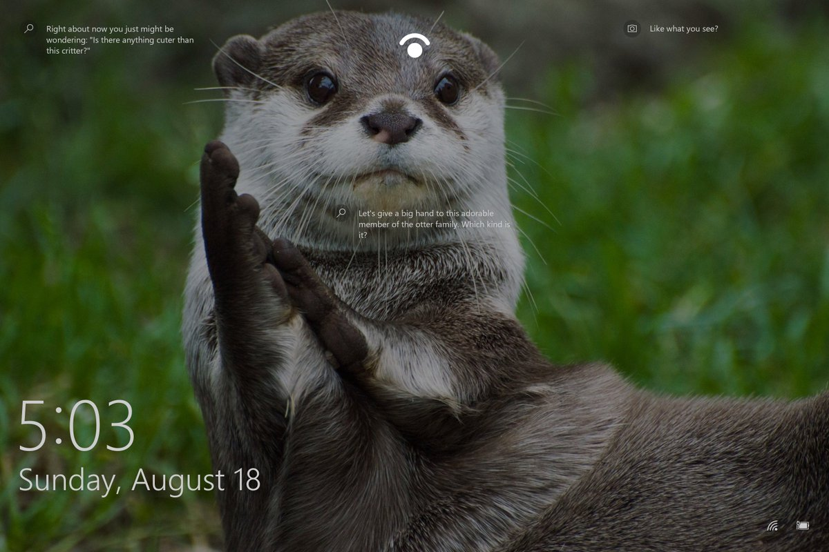Swiftonsecurity On Twitter Why Isn T There An Otter Week