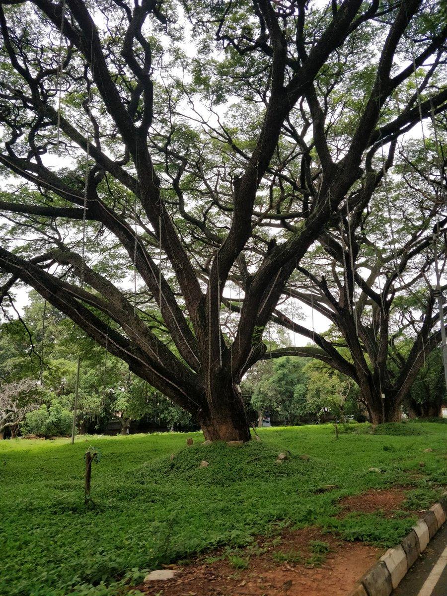 Around the city :) #Bengaluru <br>http://pic.twitter.com/fbShowu9N9