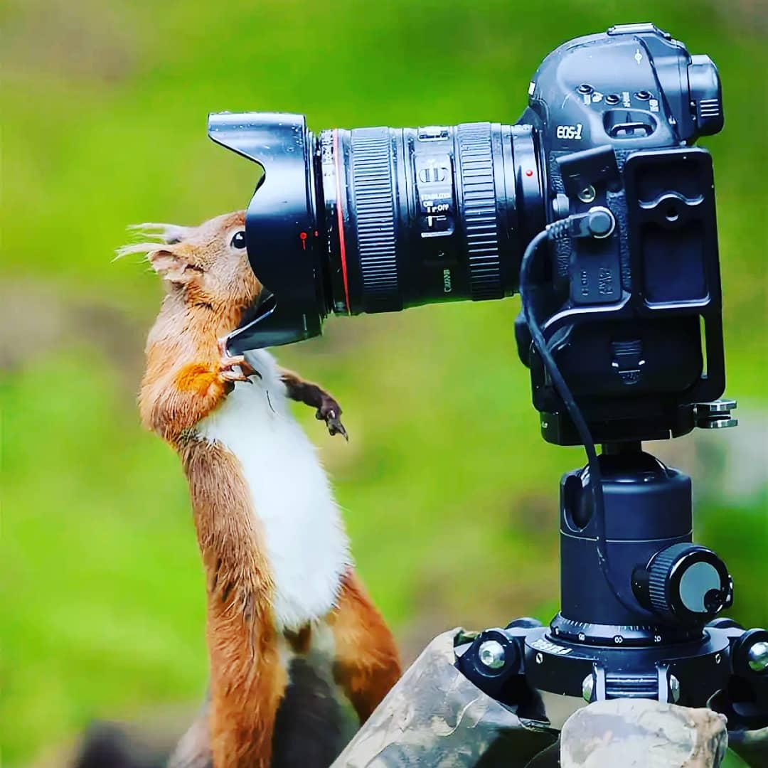 поздравить с днем фотографа