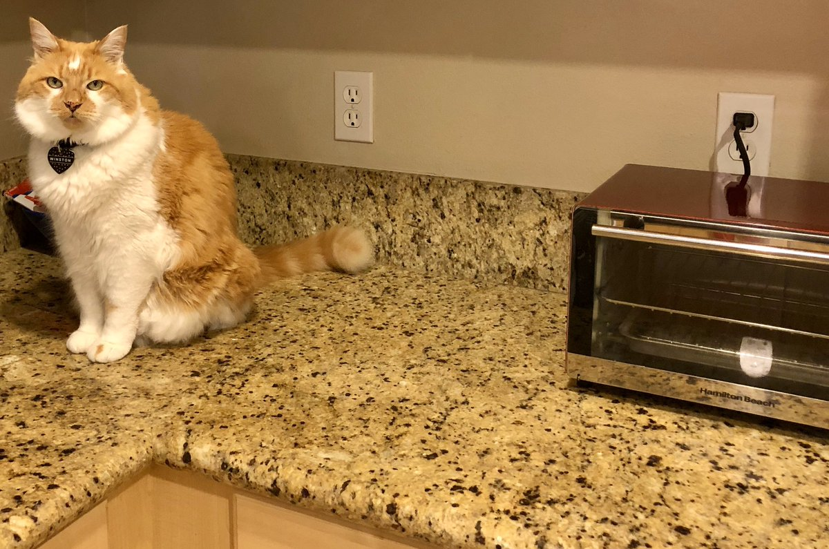 Winston's waiting on some late night snacks again #CatsofTwitter #catlife #KittyLoafMonday<br>http://pic.twitter.com/4AMw7EoiIa