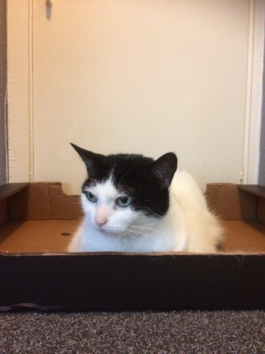 Fresh delivery I am loafing in the box straight from the bakery  happy #kittyloafmonday  <br>http://pic.twitter.com/CUpUG5UcQF