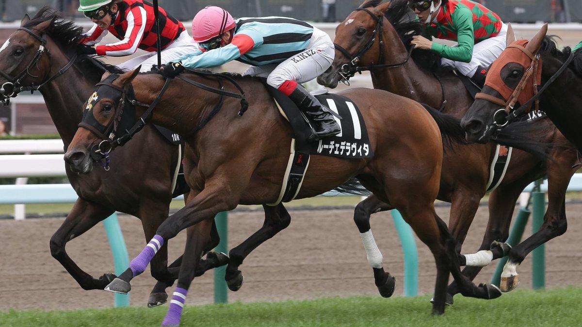 #コスモス賞 #ルーチェデラヴィタ  札幌2歳Sと同じ条件の前哨戦。人気のルーチェデラヴィタが3頭のハナ差大激戦を制し2連勝。 キズナ産駒の初勝利馬。しかも母の父は何とトウカイテイオー!!いかにもロマンある血統! 本番は池添謙ちゃんはどの馬に乗る?この馬か、オーソリティかダーリントンホール?