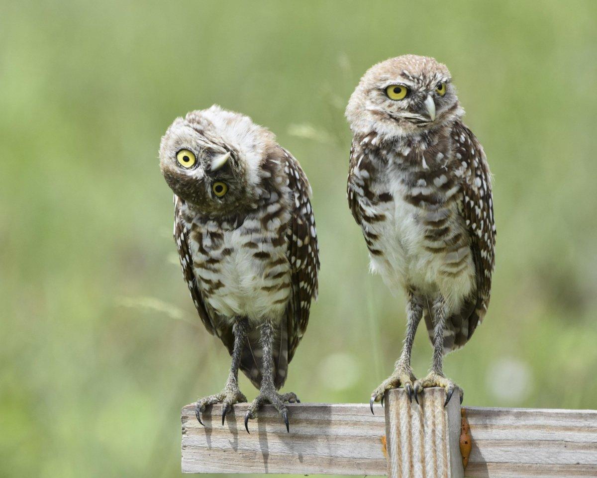 Дню, картинки две совы