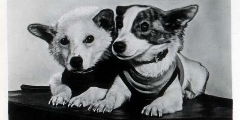 🚀🐕 #OTD in 1960 two brave dogs, Belka & Strelka, entered Earths orbit Earth on board #Sputnik5. Both survived the flight, became first living beings to safely return home, paving way for human spacefaring. Strelka had 6 pups, one of them was presented to US President Kennedy