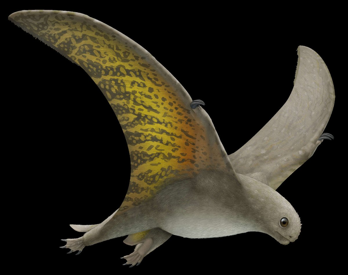 """岡部いさく on Twitter: """"中国で化石が見つかって2002年に命名された翼 ..."""