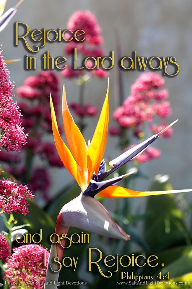 """Rejoice in the Lord always; And again I say """"REJOICE""""  #MondayMorning  #MondayMotivation  #GodIsGreat<br>http://pic.twitter.com/oQqDVqc9lz"""