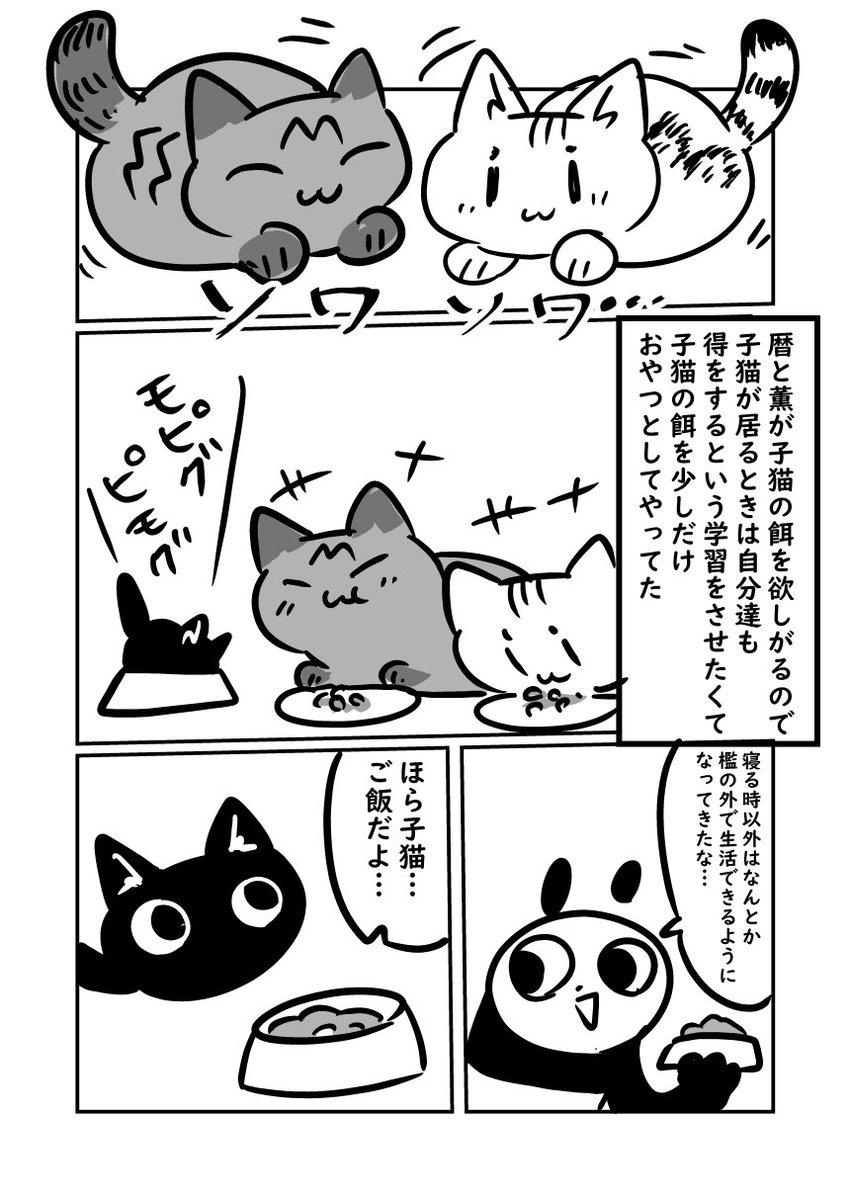 子猫が来た話 子猫の餌に魅了される大人猫 #ぬら次郎日記