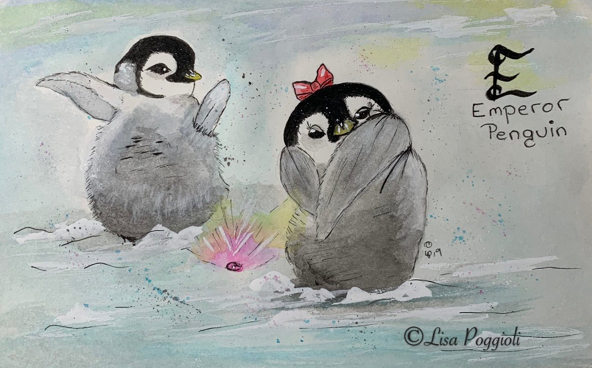 """"""" A Pebble is Forever, Will you Marry Me?""""   """"E is for #EmperorPenguin !"""" #animalalphabets Happy @AnimalAlphabets Monday Everyone!  #penandink #watercolor  #MondayMorning <br>http://pic.twitter.com/hYE0GbwUQ0"""