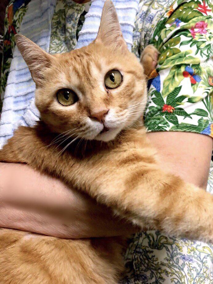 『ゴッちゃん!😺Go-chan! 』(2019/8/18) 🎨台風の翌朝、ゴッちゃんと会い、ホッとした日々を思い出していました。元気そうで何よりですニャー!#尾道 #千光寺公園 #尾道市立美術館 #茶トラ #cat