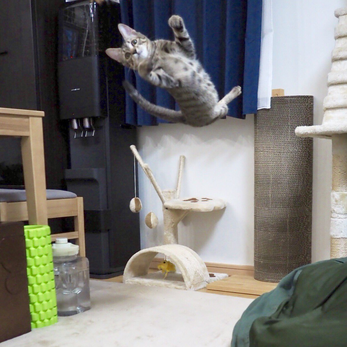 おい、嘘だろ…#保護猫 #里親さん募集中 #素敵な里親さんカモン #あげぱん