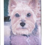 My Little Dog - A Heartbeat At My Feet. -Edith Wharton  #Art #Oils by Julia Grantham