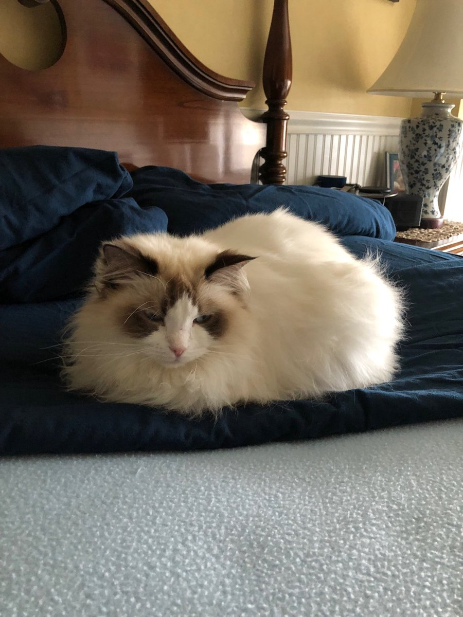 A perfect loaf for #kittyloafmonday! <br>http://pic.twitter.com/MONXZWfBZi