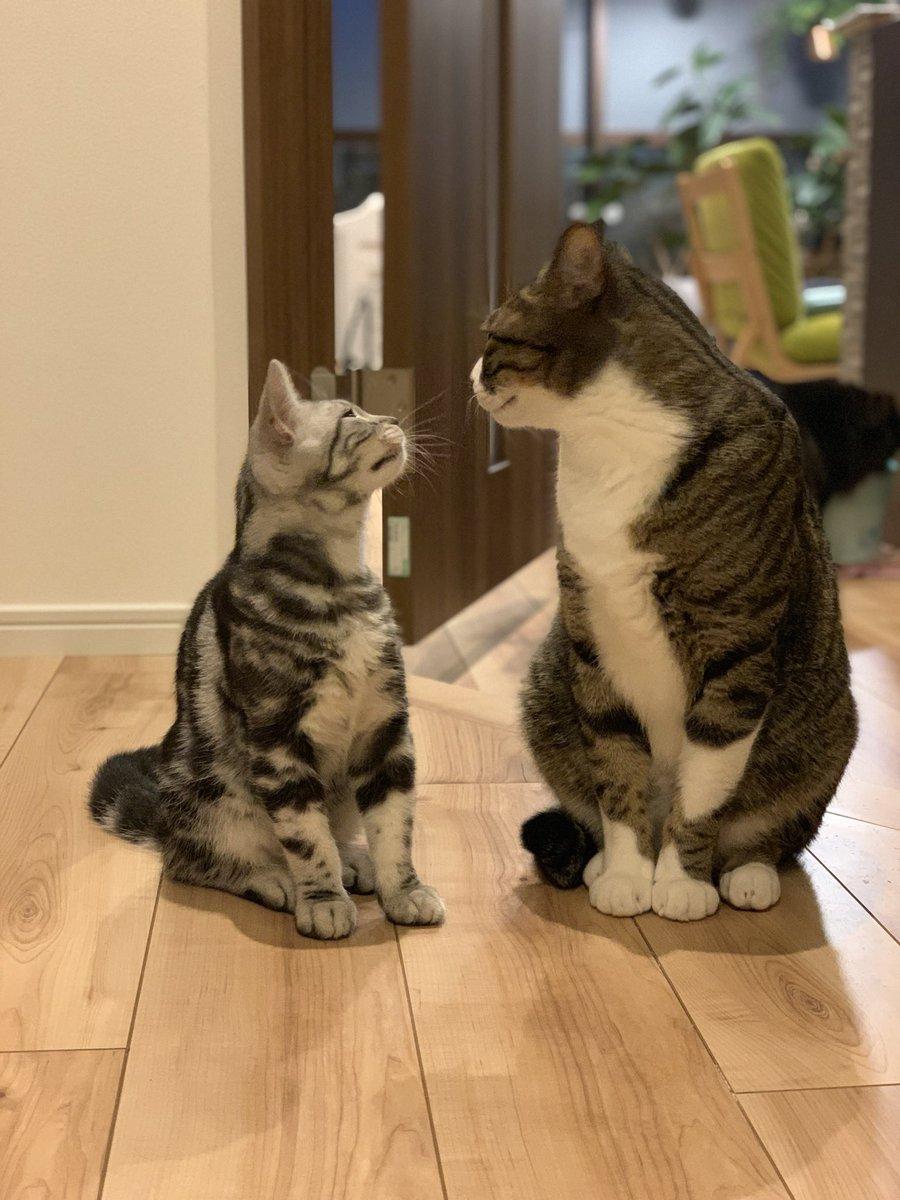 RT @nanao_ssan: 猫もあくびはうつる https://t.co/fHjYHKkExf