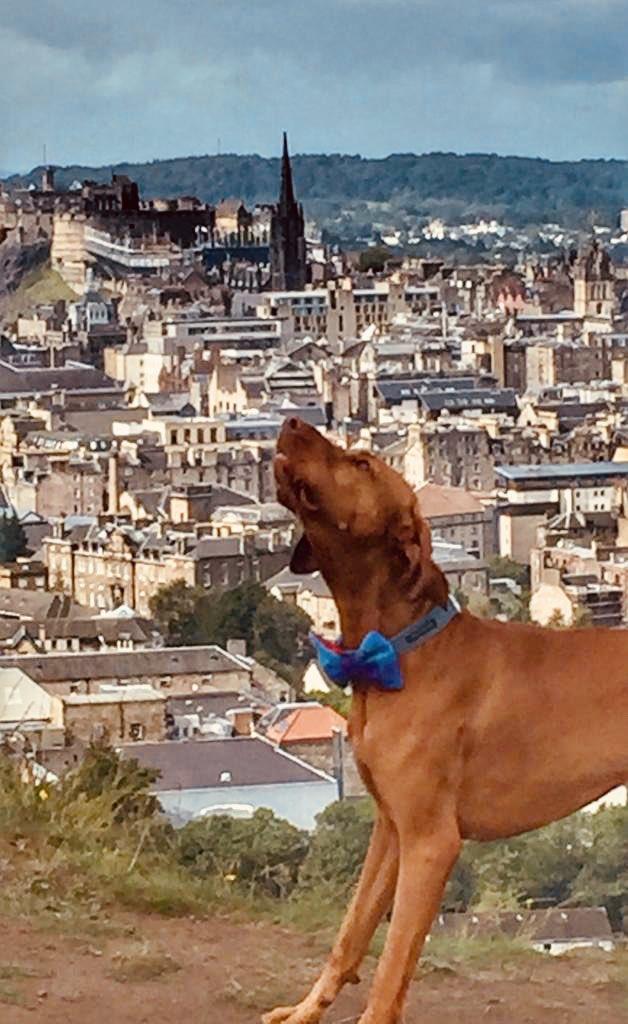 What a view. #vizsla #Edinburgh #edinburghfringe2019