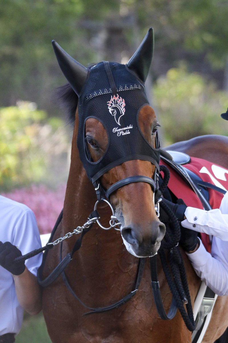 ワグネリアン福永祐一 マカヒキに続いて ダービー馬が札幌に降臨。 気品漂う美しさ あの頃のままだ。  #ワグネリアン #福永祐一
