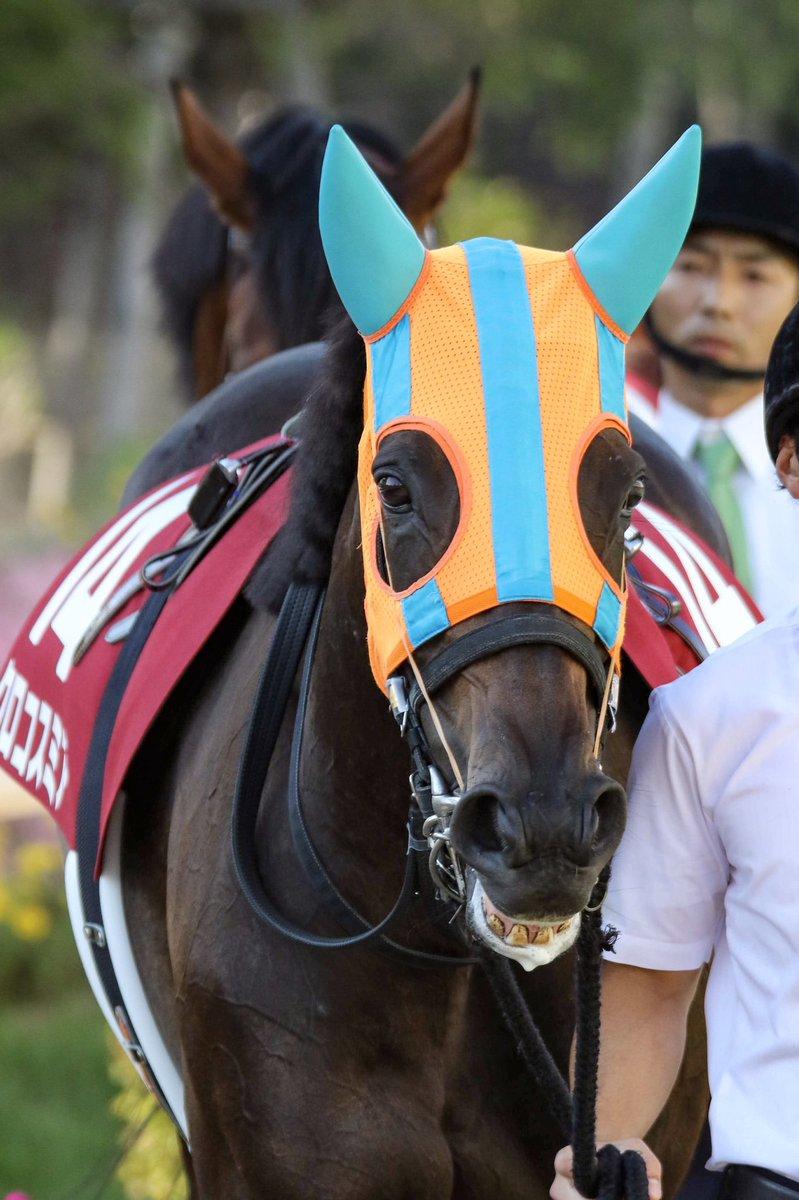 クロコスミア戸崎圭太 頑張り屋の6歳牝馬。 目指すは秋の女王。  #クロコスミア #戸崎圭太