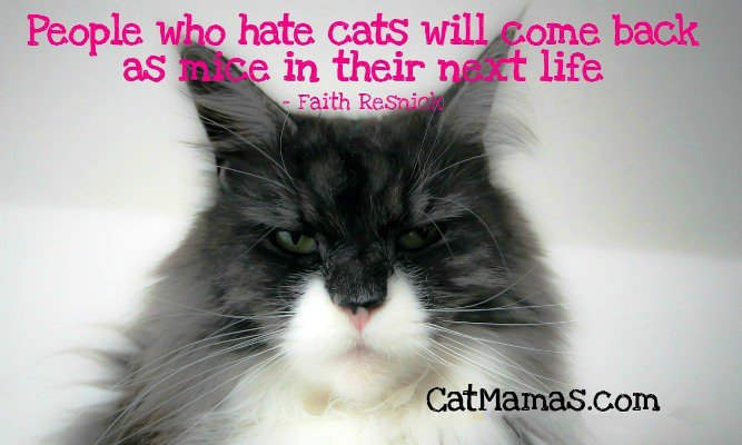 #Cats can help us to remember the laws of #karma (man)! #personaldevelopment animalspirit <br>http://pic.twitter.com/05QeoZFNg6