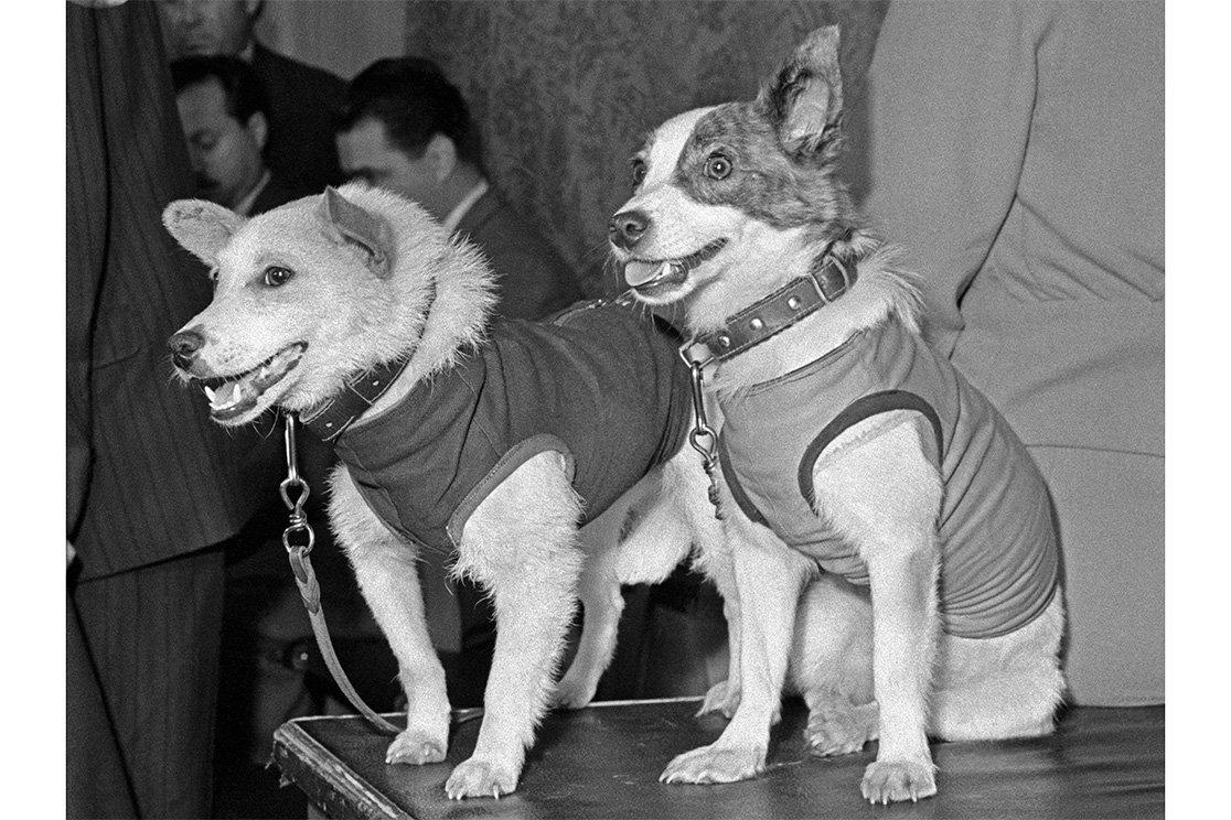 Картинка собаки белки и стрелки