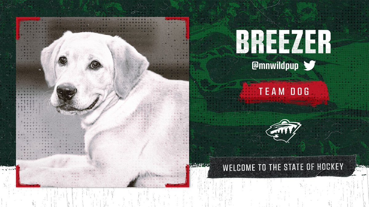 Barking News: #mnwild has acquired @mnwildpup from @chdogrescue! 📰 Welcome to the team Breezer! Breezer will join @Soldiers6MN next year → bit.ly/2Y0Wnkm