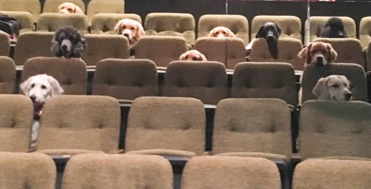Dare is Izzy, Luis and mez in dis picture can y'all see uz fink we need rooster seats  #MondayMotivation #MondayMorning #StrangerThings  #dachshund #otlfp #ZSHQ @BraveWinston #GOINGTOTHEMOVIES #HappyMonday <br>http://pic.twitter.com/JXG5weSD9T