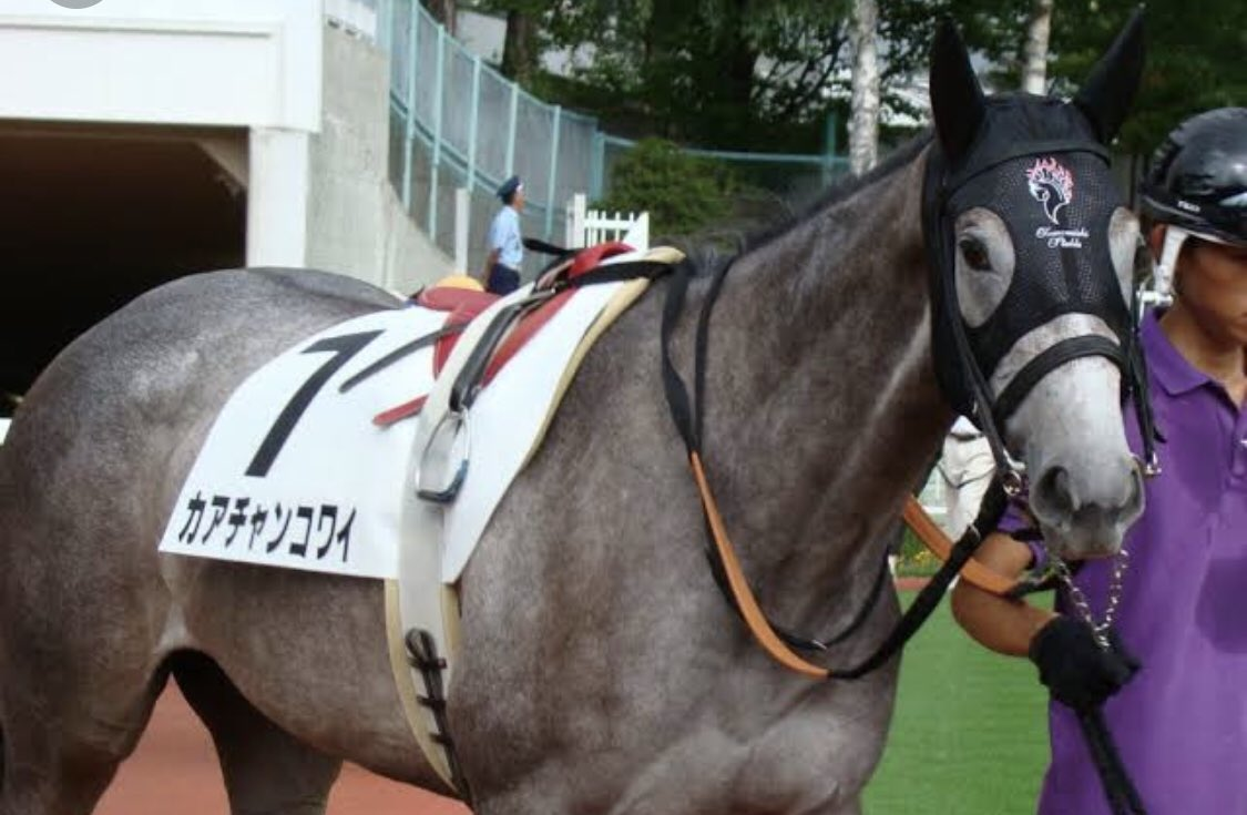 【牝馬なのに、牡馬みたいな馬名の馬、個人的ベスト5】 5.ウォッカ 4.レッツゴードンキ 3.トーワダーリン 2.ナミノリゴリラ Σ(゚Д゚) 1.ヨシカワクン Σ(゚Д゚)  以上、、、 「何の学びも無い」コーナーでした。(笑)  ※写真の馬の馬名は「カアチャンコワイ」(笑)