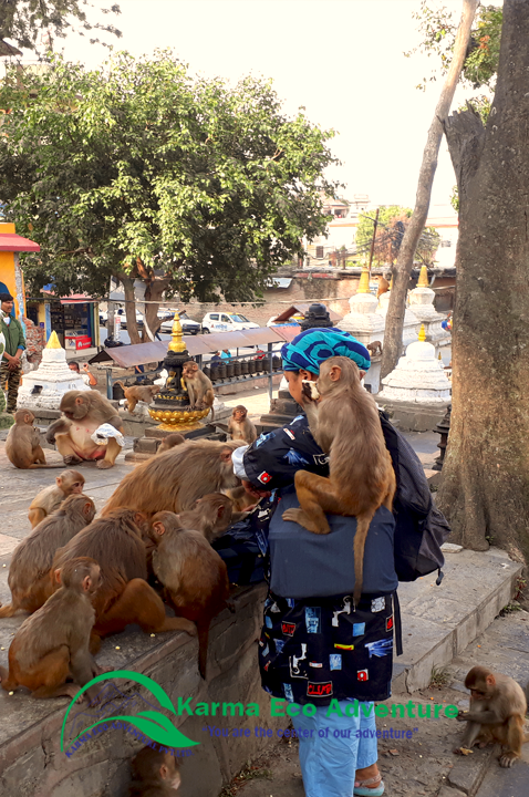 Monkeys are very familiar with the women because she is feeding food daily basis in Soyambunath temple.#explorenepal #visitnepal2020 #lifetimeexperience #Daytours #Nepal #holidays #monkeys #soyambhunath ✅https://www.karmaecoadventure.com/package/kathmandu-valley-tour/ …