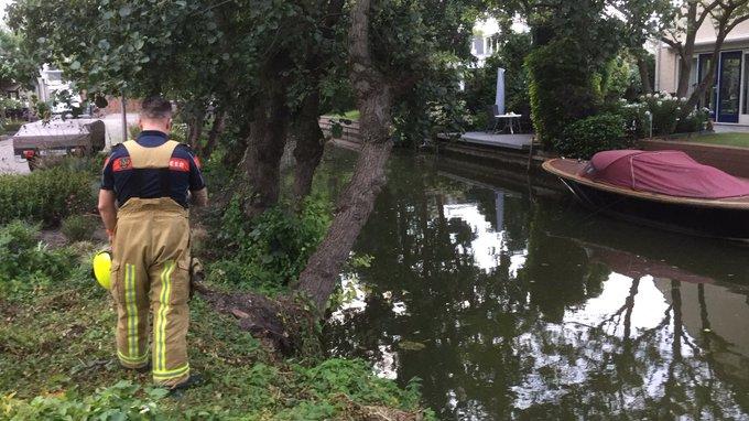 Aan de Gerbrandystraat in Naaldwijk dreigt een boom opnieuw het loodje te leggen langs de sloot. https://t.co/T7fKe31MvU