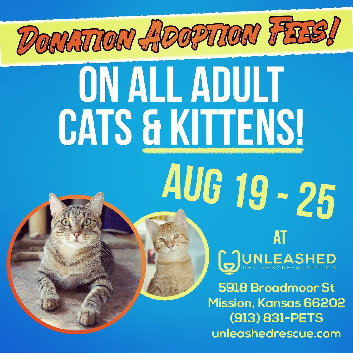 Unleashed Pet Rescue (@UnleashedRescue) | Twitter