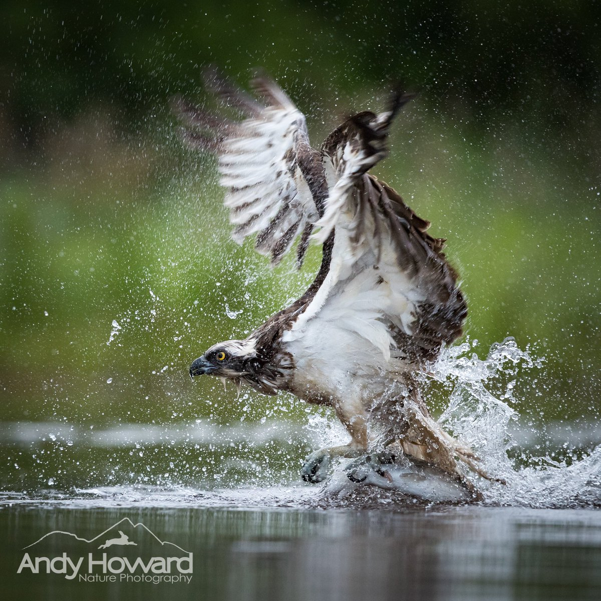 My Osprey Masterclasses for 2020 are almost full! One place remains, don't delay!  @Rothiemurchus #CarpeDiem <br>http://pic.twitter.com/pOWjwHLR2y