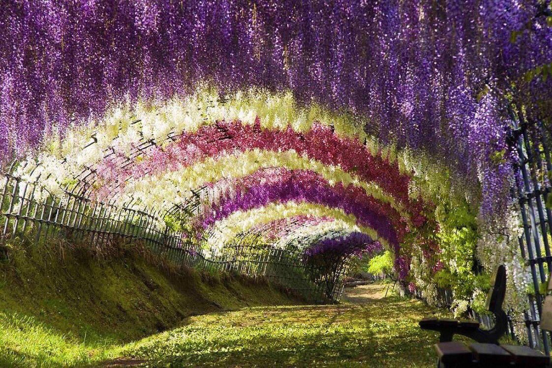 ❦Gratitude is the fragrance that lingers in the heart even when flowers are out of sight. ~Anne Scottlin #KawatchiFugiGarden #gratitude #quote #mondaymotivation #mondaythoughts <br>http://pic.twitter.com/Sz4PG5KoMp