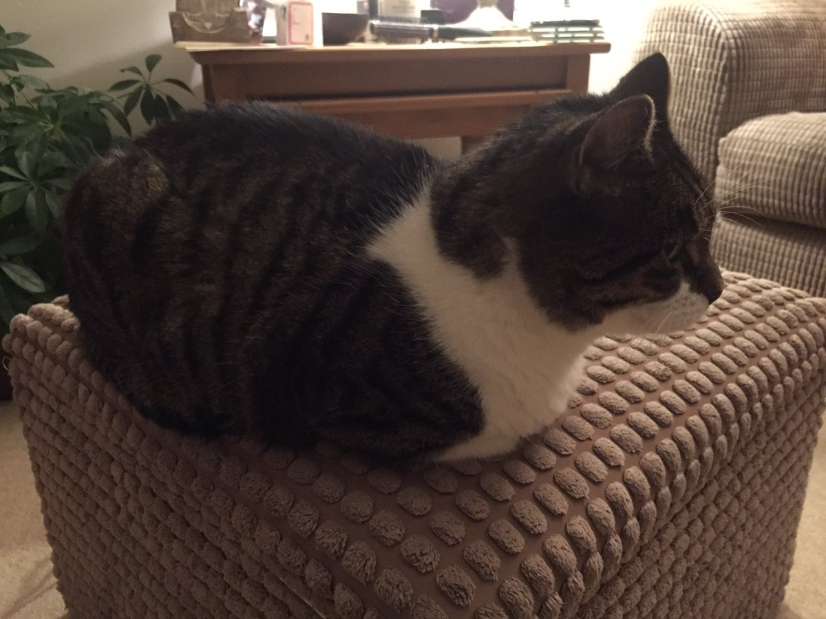 Here is my loaf for #kittyloafmonday But I refusing to make eye contact  <br>http://pic.twitter.com/cohR20BxkD