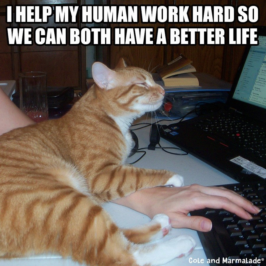 We will buy ALL the catnip! :)  #MondayMotivation #CatServant<br>http://pic.twitter.com/P5WS5UEM2m
