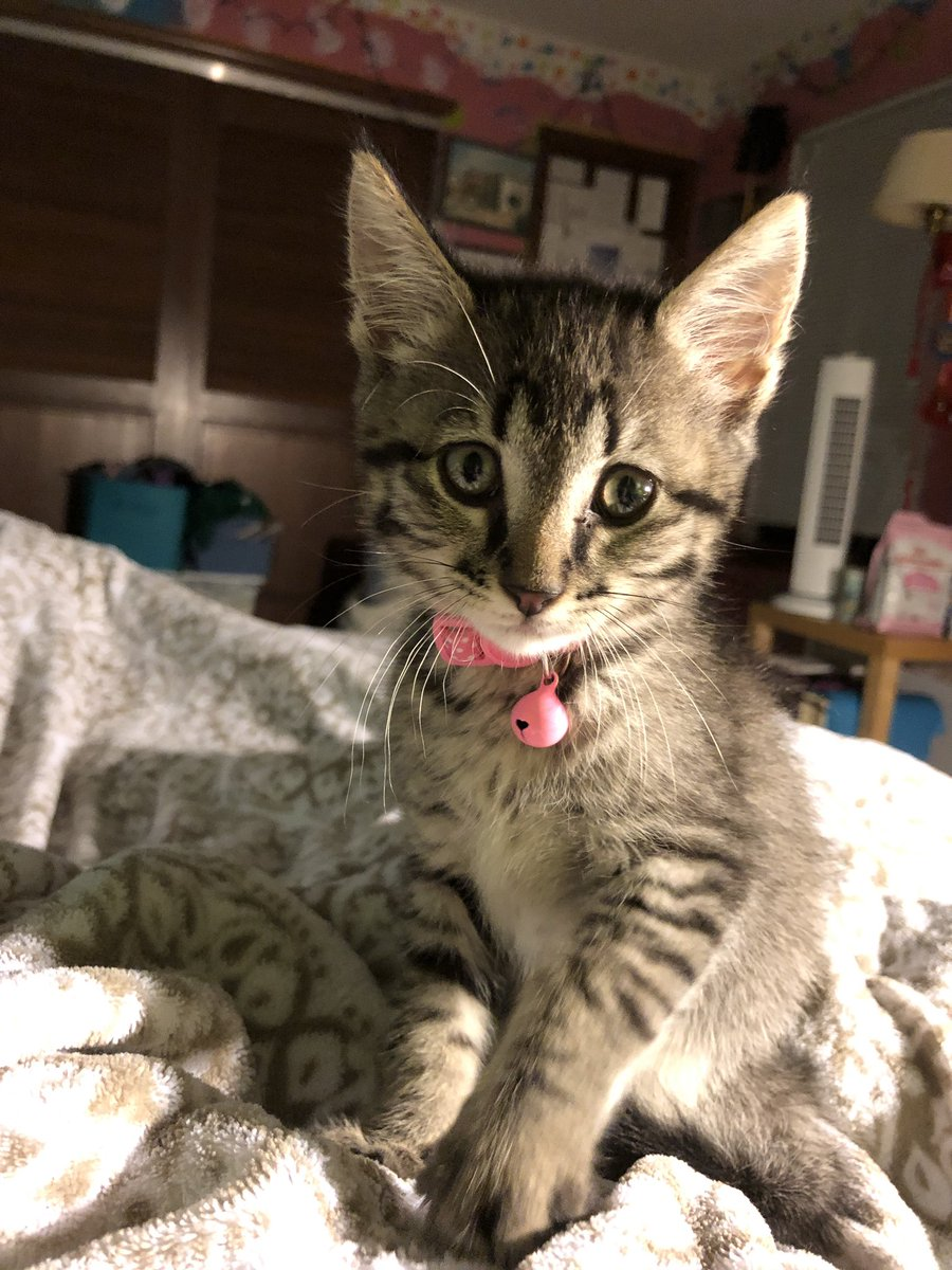 """""""Hey mum, can we just hang out and play and cuddle and nap all day?""""   #newkitten #kittens #artietheadventurer<br>http://pic.twitter.com/b5lTW1vALi"""