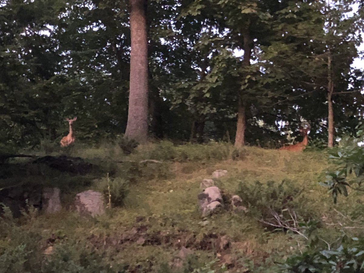 Was outside with Pancho, looked up and two deer were just watching me like 👀👀