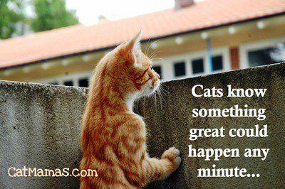 Need a quick dose of #positivity? Look no further than your cat! #selfhelp <br>http://pic.twitter.com/OLId8osuYe