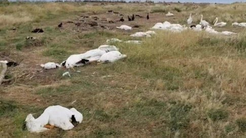 11,000+ Birds Killed in Hailstorm  From The Weather Channel iPhone App https://t.co/iOfBHnOfws