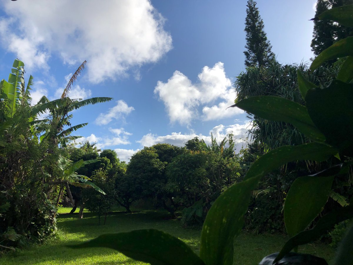 test Twitter Media - Warm and calm in Haiku. #cmweather #Maui #Mauinokaoi https://t.co/y9RU4SMcSE