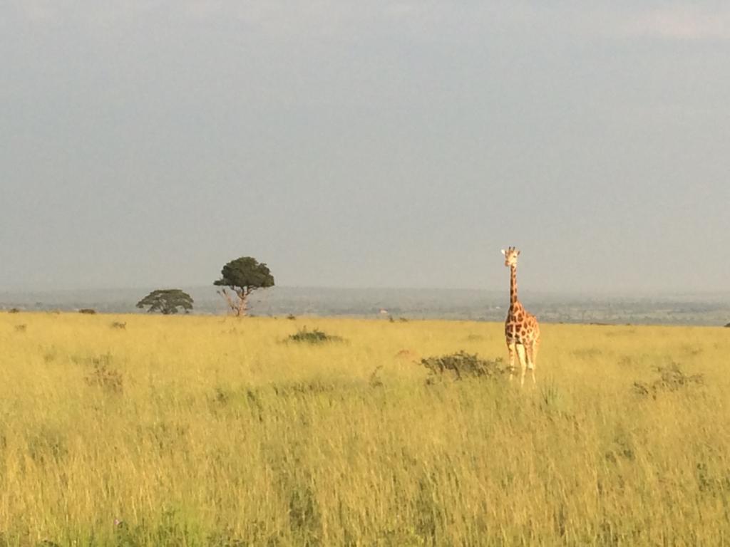 Hey there🥰 https://t.co/TlsWHT0r2d #Ugandasafaris #safarisUganda #Ugandasafari #safariUganda #Ugandatours #tourUganda #toursUganda #Ugandatour #visitUganda #Ugandasafaristours #wildjungletrails https://t.co/GtM63H5LNq