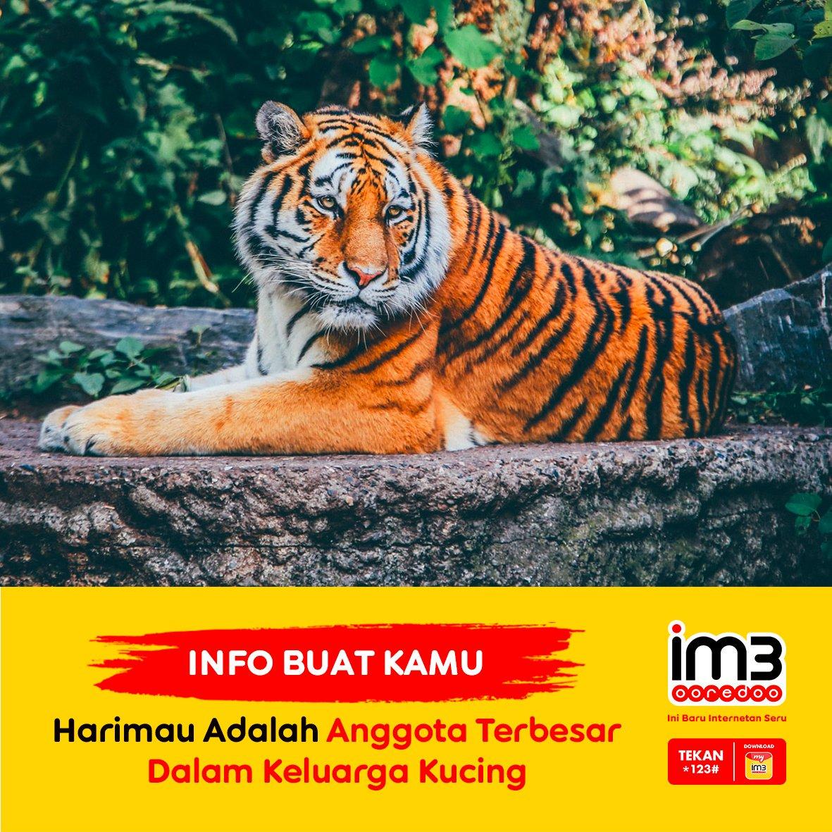 46 Koleksi Download Gambar Hewan Harimau Terbaik